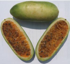 A ripening curuba (fruit) of a Banana Poka