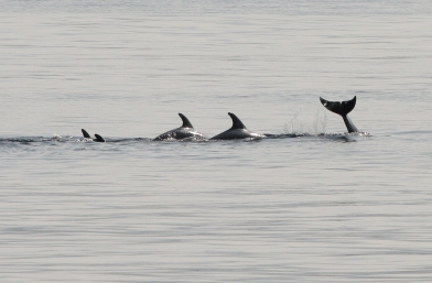 Members of the March 8th dolphin pod