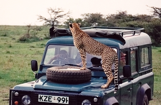 Cheetah as hood ornament: Part 1.