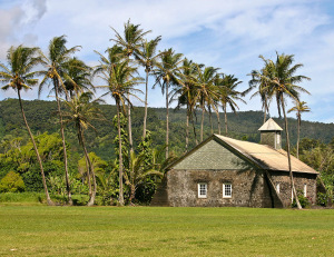 Coconut palms @ Kaenae Village church