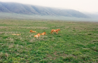 #1 five females Ngorongoro Crater rim