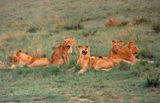 five females