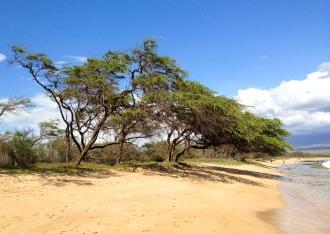 Kiawe @ Kealia Beach