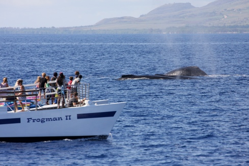 Whales and whale watchers