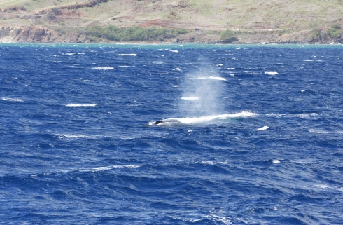 3 January 2015: Couldn't tell a whale from a whitecap!