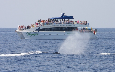 Ocean Voyager and whale blowing - 8 Feb