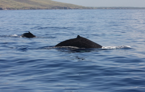 Perfect conditions: two whales