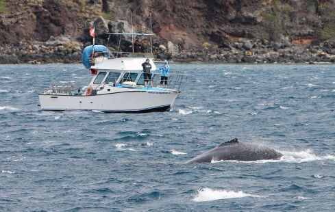 dive boat and whale - 7 March