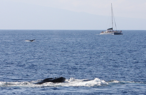 two whales and a boat