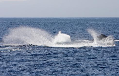 violent splashing competition pod