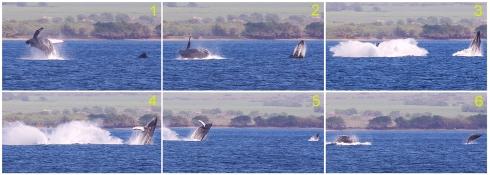 Sequential shots of a triple breach - 21 Feb 2015