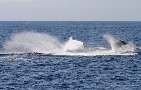 violent splashing comp pod - 22 Feb