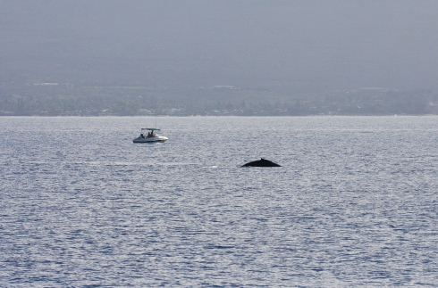 Small craft with a surfaced whale.