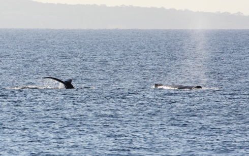 first-day whales-3