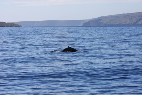 whale_molokini_kahoolawe