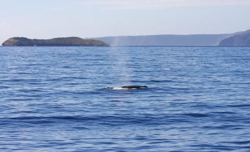 Whale - Molokini - Kaho'olawe-1