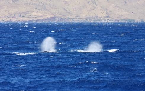 blow-high wind & heavy seas