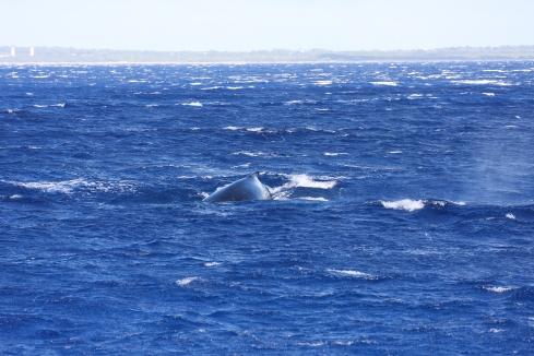 in close-high winds & heavy seas