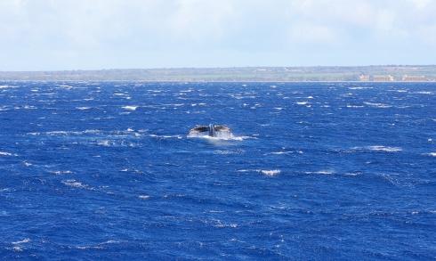 flukes up 3-high wind & heavy seas-12-26