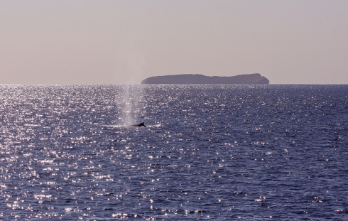 Molokini and whale-3 Jan