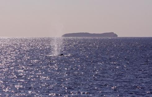 Molokini and whale-3 Jan