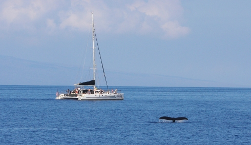 Passengers aboard the Ali'i Nui watch a solitary whale doing a flukes-up dive nearby.