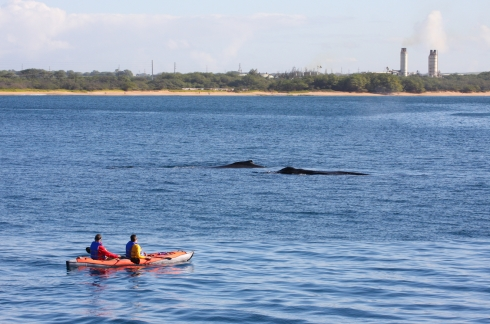kayakers & logging whales