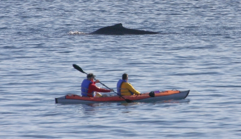 kayak and whale