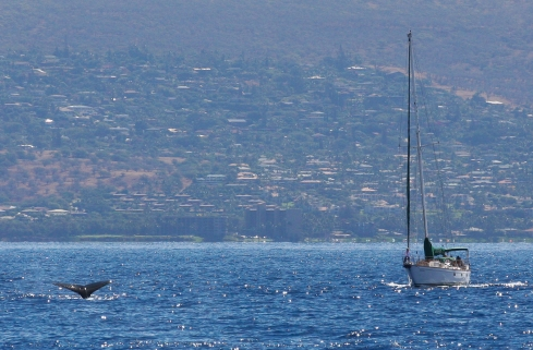 Sailboat and whale.