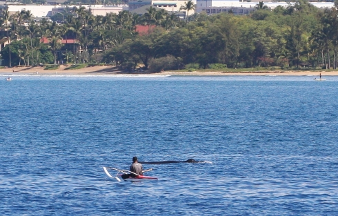 canoe and whale off beach